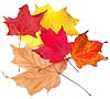leaves100.jpg (8846 bytes)